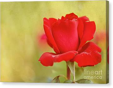Kiss Me Canvas Print by Beve Brown-Clark Photography