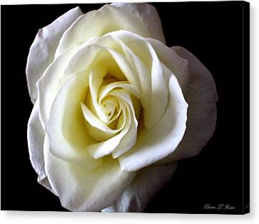 Canvas Print featuring the photograph Kiss Of A Rose by Shana Rowe Jackson