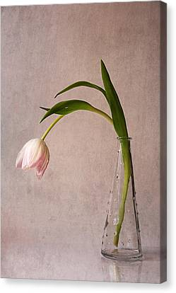 Kiss Of Spring Canvas Print by Claudia Moeckel