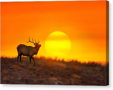 Canvas Print featuring the photograph Kiss The Sun by Kadek Susanto