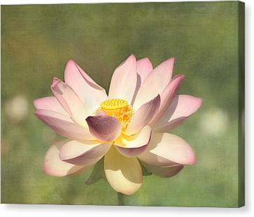 Kissed By The Sun - Lotus Flower Canvas Print