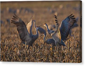 Kissing Sandhills Canvas Print