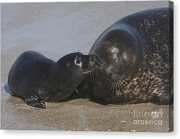 Kissing Seals Canvas Print by Ruth Jolly