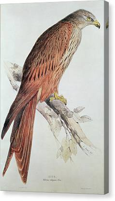 Kite Canvas Print by Edward Lear