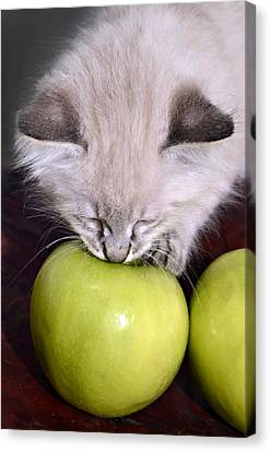 Kitten And An Apple Canvas Print by Susan Leggett