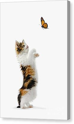 Kitten And Monarch Butterfly Canvas Print by Wave Royalty Free