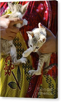 Kitten Canvas Print by Bobby Mandal