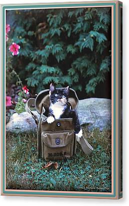 Kitten In A Canvas Bag Canvas Print by Patricia Keller