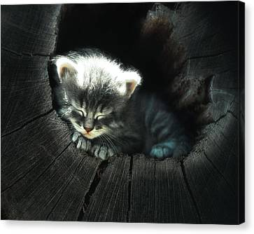 Kitten In A Log Canvas Print