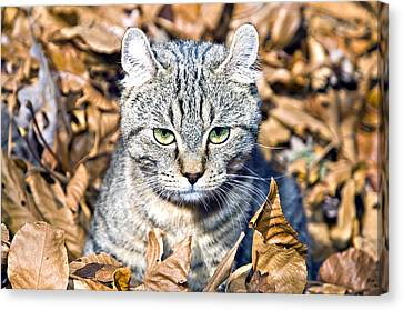 Canvas Print featuring the photograph Kitten In Leaves by Susan Leggett
