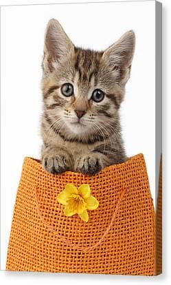 Kitten In Orange Bag Canvas Print by Greg Cuddiford