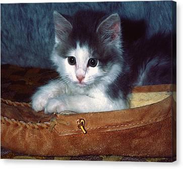 Kitten In Slipper Canvas Print by Sally Weigand