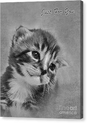 Kitten Just For You Canvas Print