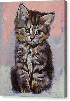 Chat Canvas Print - Kitten by Michael Creese