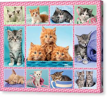 Kittens Gingham Multipic Canvas Print by Greg Cuddiford