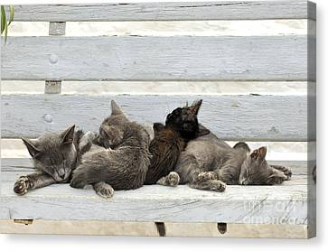Kittens In Hydra Island Canvas Print
