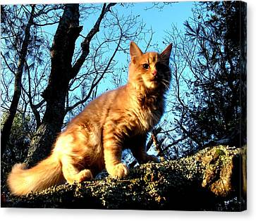 Kittery Cat Canvas Print by Donnie Freeman