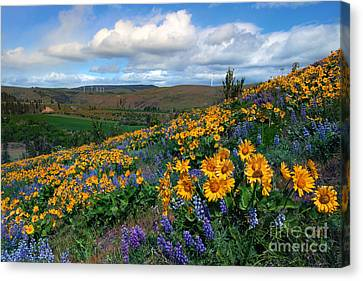 Kittitas Valley Color Explosion Canvas Print by Mike  Dawson