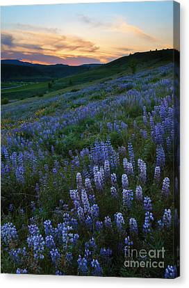 Kittitas Valley Spring Canvas Print by Mike  Dawson