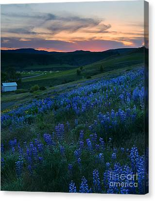 Kittitas Valley Sunset Canvas Print by Mike  Dawson