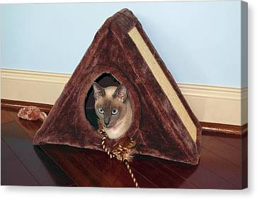 Kitty A-frame Canvas Print by Sally Weigand