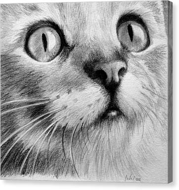 Canvas Print featuring the drawing Kitty Cat by Eleonora Perlic
