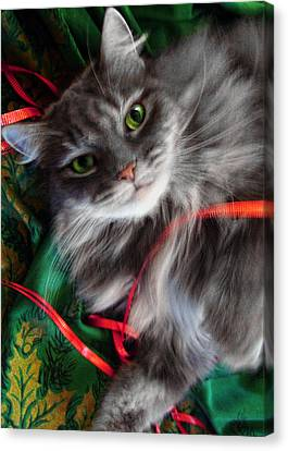 Kitty Christmas Card Canvas Print