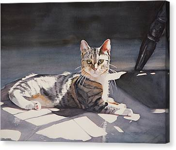 Kitty Canvas Print by Christopher Reid
