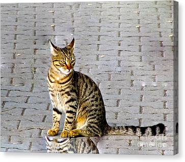 Kitty In Sevastopol Russia Canvas Print by Phyllis Kaltenbach
