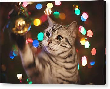 Kitty In The Lights Canvas Print