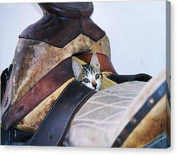 Kitty In The Saddle Canvas Print by Kae Cheatham