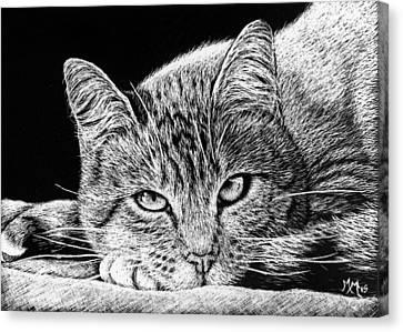 Feline Canvas Print - Kitty by Monique Morin Matson