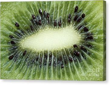 Vitamine Canvas Print - Kiwi by Darren Fisher