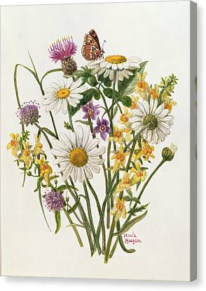 Knapweed, Ox-eye Daisy And Toad Flax Wc On Paper Canvas Print by Ursula Hodgson