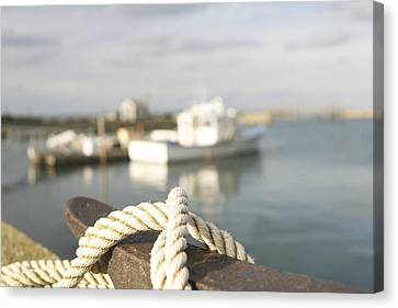 Knot Going Far Canvas Print by Eugene Bergeron