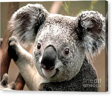 Koala Bear Canvas Print by Marvin Blaine