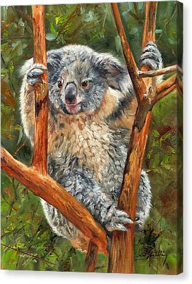 Koala Canvas Print by David Stribbling