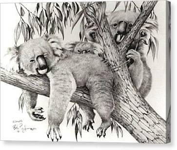 Koala Canvas Print - Koala Family by Bob Patterson