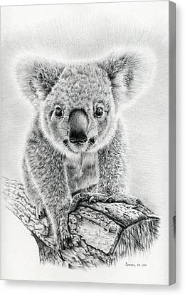 Koala Oxley Twinkles Canvas Print by Remrov