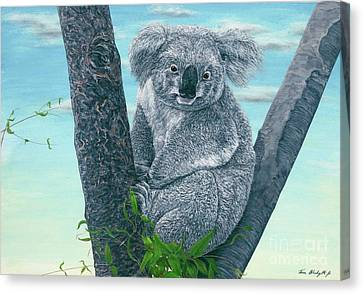 Koala Canvas Print by Tom Blodgett Jr