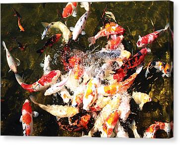 Koi Canvas Print by Ange Sylvestri