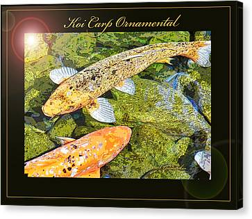 Koi Carp Goldfish Ornamental Framing Print Canvas Print