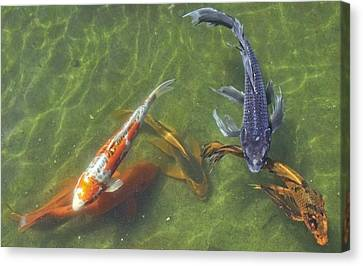Canvas Print featuring the photograph Koi by Daniel Sheldon