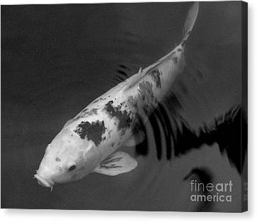Koi In Black And White Canvas Print by Mary Deal