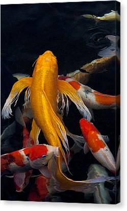 koi Canvas Print by James Roemmling