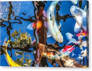 Koi Pond Canvas Print by Alexander Kunz