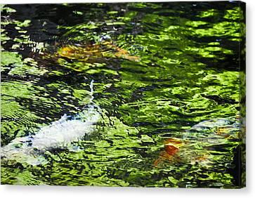 Koi Pond Canvas Print by Christi Kraft