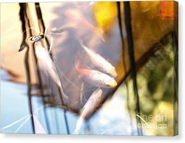 Koi The Symbol Of Love And Friendship Canvas Print by Artist and Photographer Laura Wrede