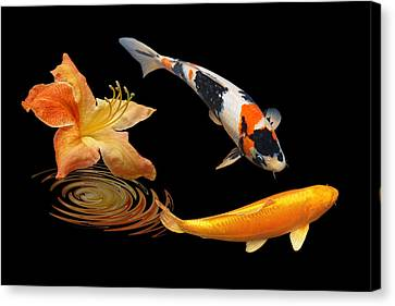 Koi With Azalea Ripples Canvas Print by Gill Billington