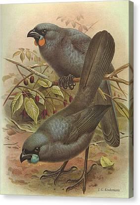 Audubon Canvas Print - Kokado by Dreyer Wildlife Print Collections
